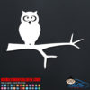 Owl On a Branch Decal